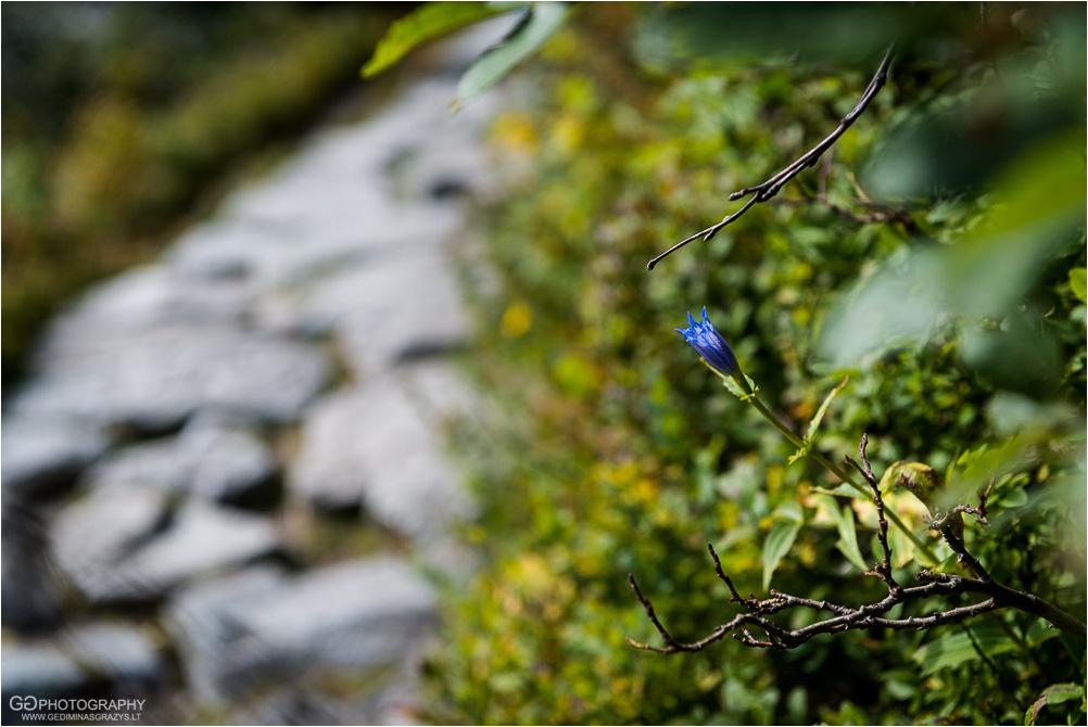 Gamtos-fotografija-Zakopane-kalnai-10
