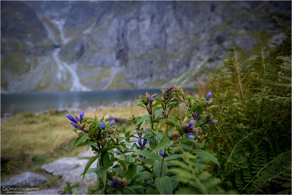 Gamtos-fotografija-Zakopane-kalnai-25