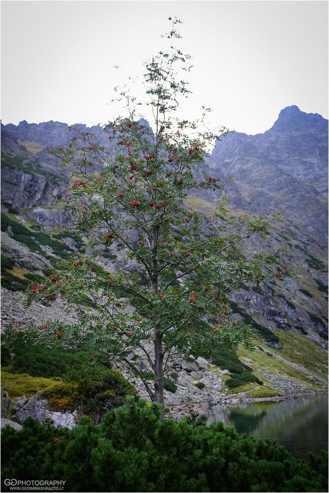 Gamtos-fotografija-Zakopane-kalnai-26