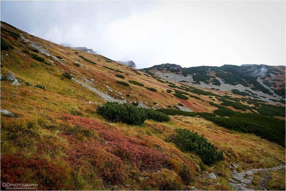 Gamtos-fotografija-Zakopane-kalnai-77
