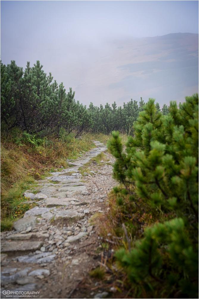Gamtos-fotografija-Zakopane-kalnai-80
