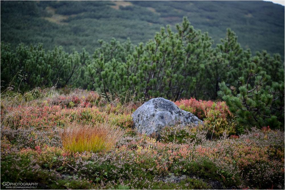 Gamtos-fotografija-Zakopane-kalnai-83