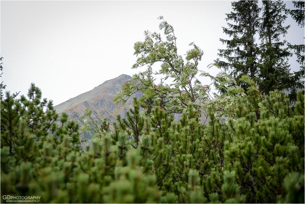 Gamtos-fotografija-Zakopane-kalnai-84
