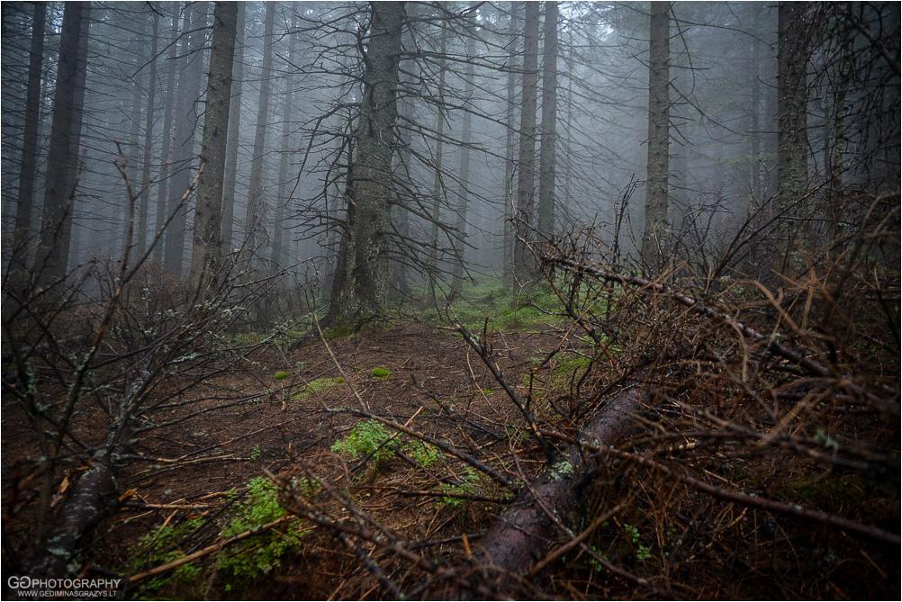 Gamtos-fotografija-Zakopane-kalnai-89